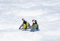 new year card with beautiful funny birds tits in festive Christmas red hats flew into the snowy winter garden and it is important royalty free stock images