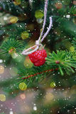 New Year card. Raspberry hanging on spruce. Royalty Free Stock Photos