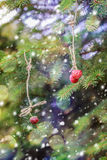New Year card. Strawberries hanging on a spruce branch. Stock Images