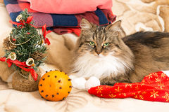 New year cat with Santa red hat looking at camera Royalty Free Stock Photos