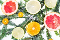 New Year and Christmas branch of spruce, decorated with fruits Stock Photography