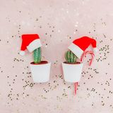 New Year or Christmas creative composition flat lay top view Xmas holiday celebration handmade santa cactuses pink golden stars. Background copy space Template stock photo