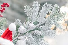 New Year and Christmas decor. Festive background with decorative artificial snow-covered branches of the Christmas tree in green royalty free stock images