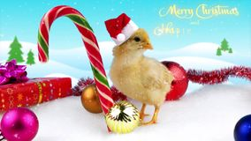 New Year and Christmas 2017 greeting card with text, young or rooster. Sign of the 2017, with winter background and snowfall