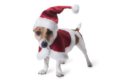 New year and Christmas pets Royalty Free Stock Images