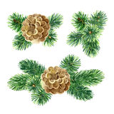 New Year compositions of fir branches and cones Royalty Free Stock Photography
