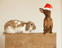 New year Cute friends. Puppy and rabbit in red christmas hat Stock Photography
