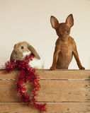 New year Cute friends. Puppy and rabbit in red christmas hat Stock Image