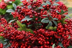 New year decor from artificial red berries and green leaves stock photos