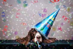 New year dog stock photography