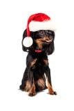 New Year Dog in Santa Hat Stock Image