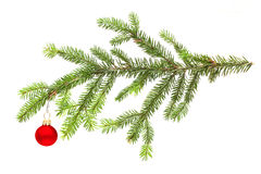 New Year fir and red ball Stock Image