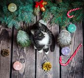 New year flat lay.black and white cat on a wooden floor with Christmas decorations and fir branches stock photo
