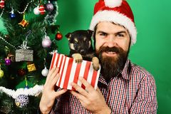 New year gift. Man in xmas hat plays with puppy. New year gift concept. Man in xmas hat plays with puppy. Guy with cheerful face unpacks tiny present box on stock image