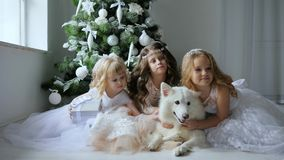 New Year, girlfriends in elegant dresses hug dog on background a Christmas tree with white balls. New Year, girlfriends in elegant dresses hug a dog on stock footage