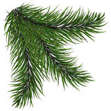 New year green Christmas trees and wreaths Fir branch with long needles. New year green Christmas trees and wreaths Royalty Free Stock Photo