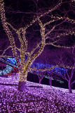 New Year Illuminations in Japan. New Year Illuminations in Tokyo, Japan Stock Images