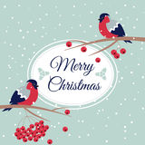 New Year and Merry Christmas Bullfinch Stock Photo