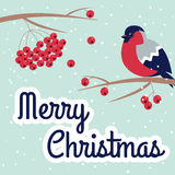 New Year and Merry Christmas Bullfinch Stock Image