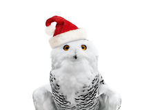 New year owl Royalty Free Stock Photography