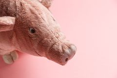 New Year of the pig on the Chinese calendar stock photography