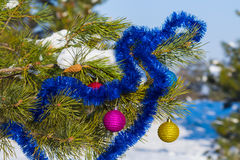 New year pine tree Royalty Free Stock Photography