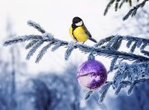 New year postcard a natural landscape with a bird tit is sitting royalty free stock photos