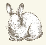 New year rabbit drawing. New year cute white rabbit drawing stock illustration