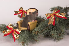 New Year Rat In A Chair Stock Image