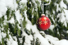 New Year red ball on winter forest background Royalty Free Stock Images