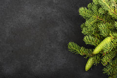 New Year`s background: fluffy green fir branches on a dark coal background under the inscription with a free space under Stock Image