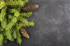 New Year`s background: fluffy green fir branches on a dark coal background under the inscription with a free space under Royalty Free Stock Image