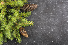 New Year`s background With imitation of flying snow throughout the picture: fluffy green fir branches on a dark coal Stock Photography