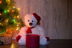 New Year, Christmas bear is sitting under the tree with an open empty round red box to put the item. Copy space, congratulatory ba. A New Year`s, Christmas bear stock photos