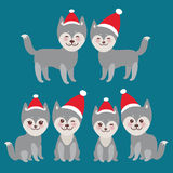 New Year's and Christmas funny gray husky dog in Stock Images
