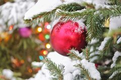 New Year`s Christmas red ball on a tree in the snow, close-up, New Year`s card royalty free stock images