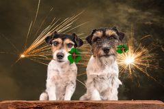 New Year`s Eve dog - fortune boats - Jack Russell Terrier royalty free stock photography
