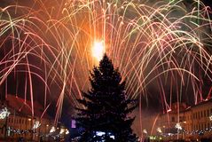 New Year's Eve fireworks. Behind  Christmas tree Royalty Free Stock Photos