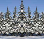 New Year's fur-trees. The symmetric image with fur-trees in snow royalty free stock photography
