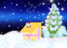 New year's gift. In box under fir tree on snow Royalty Free Stock Photos