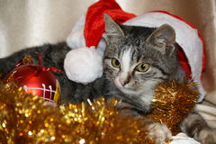 New year's kitten royalty free stock photography