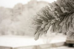 New Year`s landscape. Christmas tree royalty free stock photo
