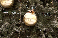 New Year's spheres on fir-tree branches Stock Images