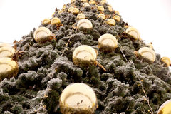 New Year's spheres on fir-tree branches Royalty Free Stock Images