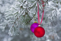New Year's toy on branch in natural winter forest Royalty Free Stock Photo