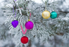 New Year's toy on branch in natural winter forest Royalty Free Stock Image