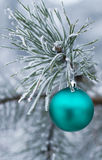 New Year's toy green ball on forest tree Stock Photos