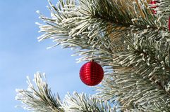 New Year's tree. Pine branch covered with snow and a red New Year's sphere Royalty Free Stock Photography
