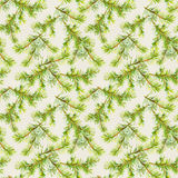 New year seamless pattern with branches of christmas tree Royalty Free Stock Photography