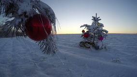 New Year  sunrise and Christmas tree  on snowy farmland field, time lapse 4K stock video